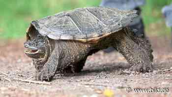 Plan des Kreises Viersen - Schildkröten erschießen – ist das nicht grausam? - BILD