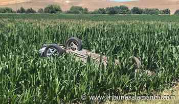 Espectacular vuelco de un vehículo que acaba en medio de un maizal en Garcihernández - Tribuna de Salamanca