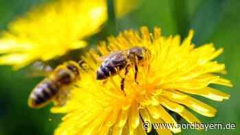 Wie ein Landwirt und seine Sponsoren die Bienen retten - Nordbayern.de