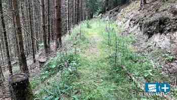 Zwischen Winterberg und Medebach: Der einsamste Ort in NRW - WP News
