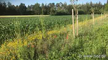Mehr Blühflächen in Wietmarschen wichtig zum Schutz der Insekten - noz.de - Neue Osnabrücker Zeitung