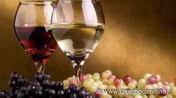 Terroir Marche 2020, a Civitanova alla scoperta dei vini del territorio - il Resto del Carlino