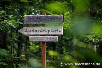 Kamenz: Friedwald startet im Herbst - Sächsische Zeitung