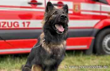 FW-NE: Hundestaffel leistet Amtshilfe in Grevenbroich   Personensuche in der Nacht - Presseportal.de