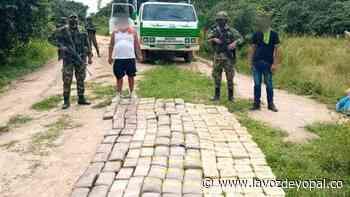 Autoridades incautaron marihuana en zona rural de Paz de Ariporo - Noticias de casanare - La Voz De Yopal