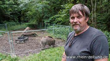 Wo ist Peppa? Cochemer Veterinär hat das Wildschwein beschlagnahmt - Rhein-Zeitung