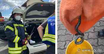 Eppelborn: Schlange während Fahrt in Auto entdeckt - sol.de