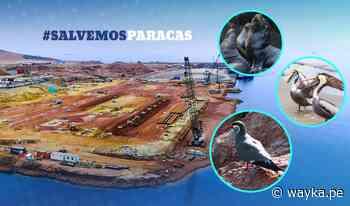 [GRÁFICA] Consorcio que impulsa puerto en Paracas amenaza con demanda al Estado peruano - Wayka