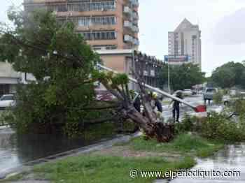 Cayó árbol en la Av. Bolívar de Maracay - El Periodiquito
