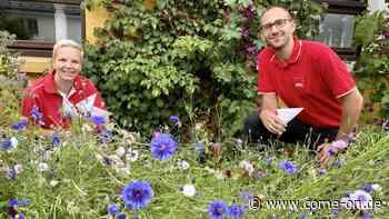 SPD Kierspe will mehr Engagement beim Anpflanzen von Wildblumenwiesen - Meinerzhagener Zeitung