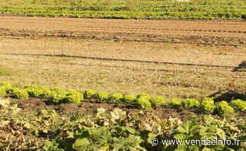 Le 23 juillet, visitez les fermes à la Pelletrie aux Herbiers - Vendée Info