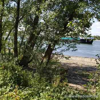 Wesseling: Rund 70 Bäume am Rhein müssen gefällt werden - radioerft.de
