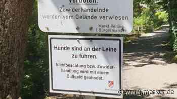 Diskussion im Peitinger Marktgemeinderat Leinenpflicht für Peitings Hunde? - Merkur.de