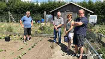 Nieppe : ras-le-bol des adhérents suite à de nouveaux vols de légumes aux jardins ouvriers - La Voix du Nord