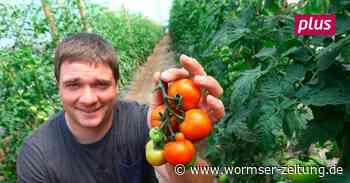 Gemüse selbst ernten in Pfungstadt - Wormser Zeitung