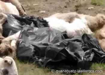 Encuentran una veintena de perros muertos en San Luis de la Paz - La Silla Rota