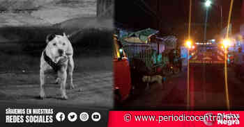 Muere perro pitbull atacado a puñaladas anoche en Santa Anita, Puebla - Periódico Central