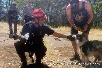 Firefighters rescue dog that fell into 'Abyss' crevice in Nanaimo - Alberni Valley News