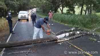 Solicitan identificar árboles enfermos a orillas de la carretera cruce Sabanagrande-Macaracas - La Prensa Panamá
