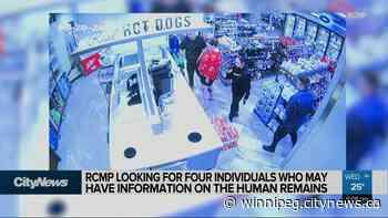 RCMP looking for tips in Portage la Prairie homicide - CityNews Winnipeg