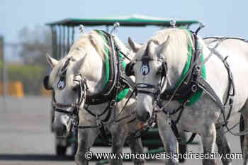 Victoria carriage operator trots horse-drawn trolley tours into Brentwood Bay - vancouverislandfreedaily.com