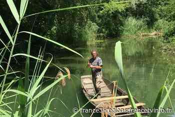 L'île de Rhinau, une petite jungle rhénane - France 3 Grand Est - France 3 Régions
