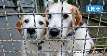 Tierschützer befürchten dramatischen Anstieg von ausgesetzten Tieren - Lübecker Nachrichten