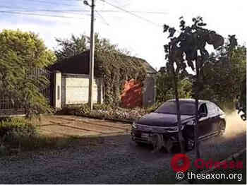 In Podolsk, the driver of the Volkswagen were chasing the dog, trying to run him over (video 18+) - The Saxon
