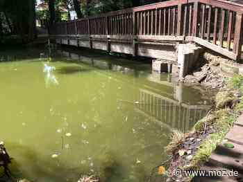 Umwelt: Wasserspiegel im Boddensee in Birkenwerder sinkt wieder - Märkische Onlinezeitung
