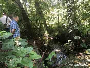 Boddensee: Biber wird in Birkenwerder ausgetrickst - MOZ.de - Märkische Onlinezeitung