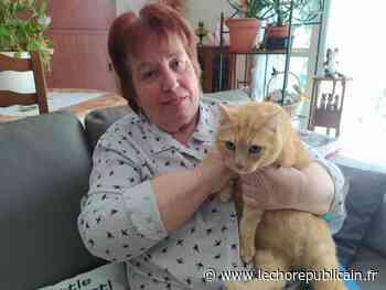 A Vernouillet, le déconfinement des chats errants - Echo Républicain