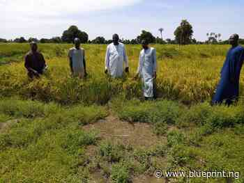 NERI to establish agricultural knowledge information system in Yobe - Blueprint newspapers Limited