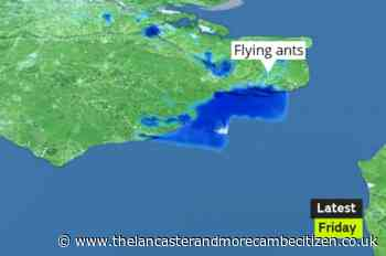 Swarm of flying ants caught on weather radar over south coast - Lancaster and Morecambe Citizen