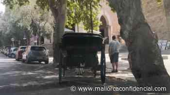 Los caballos de las galeras de Palma circulan a pesar de la prohibición por altas temperaturas - Mallorca Confidencial