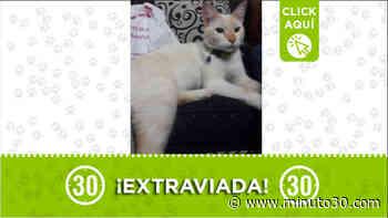 Gatica encontrada en el barrio Belalcázar - Minuto30.com