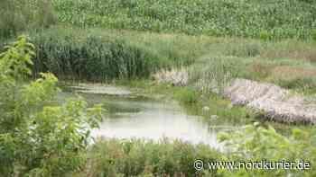 Anwohner besorgt um Wasserstand in Anklam - Nordkurier