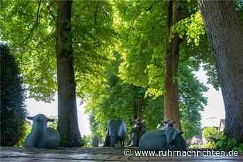 Stadtlohner Owweringpark soll mit Hilfe der Bürger umgestaltet werden - Ruhr Nachrichten