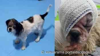 Cão resgatado pela Saau em Umuarama em péssimo estado se recupera e ganha nome - ® Portal da Cidade   Umuarama