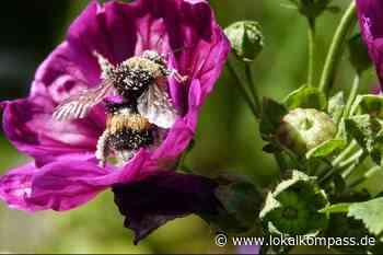 Mein Garten: Bienenfutter - Neukirchen-Vluyn - Lokalkompass.de