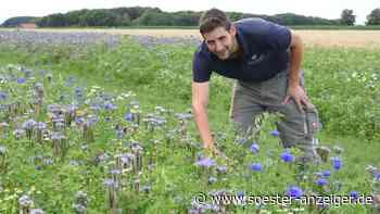 Ense ist bunt: Gemeinde und Landwirte legen immer mehr Blühflächen an - Soester Anzeiger