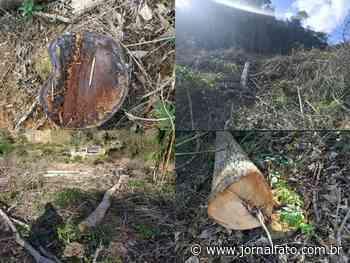 Área de desmatamento é encontrada em Muniz Freire - Jornal FATO
