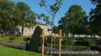 BUND: Straßenbäume haben Durst - Wetterauer Zeitung