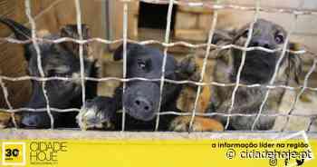 Santo Tirso: Dezenas de animais, fechados em abrigo, morreram queimados e sem ajuda [c/vídeo] - Cidade Hoje