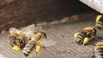 Des ruches touchées par un incendie entre Senlis et Fleurines - Courrier Picard