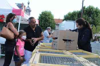 Puy-de-Dôme - Dans le secteur d'Issoire, les ventes de poules ont explosé depuis le confinement - La Montagne