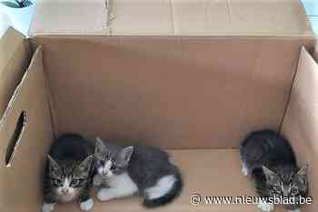 """Dierenopvangcentrum zoekt gastgezinnen voor massaal gedumpte kittens: """"Baasjes blijven hun verantwoordelijkheid ontlopen"""""""