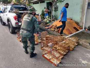 Papagaios, canários e jabutis são resgatados pela polícia em cativeiro - Tribuna Online