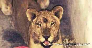 Abandonan a leona cachorra dentro de un domicilio en Ciénaga de Flores - Multimedios