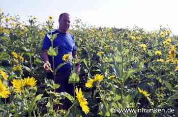 Wunderwaffe mit gelben Blüten wächst bei Weisendorf