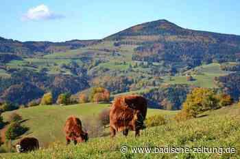 Die Stadt Zell sucht das schönste Foto aus dem Bergland - Zell im Wiesental - Badische Zeitung